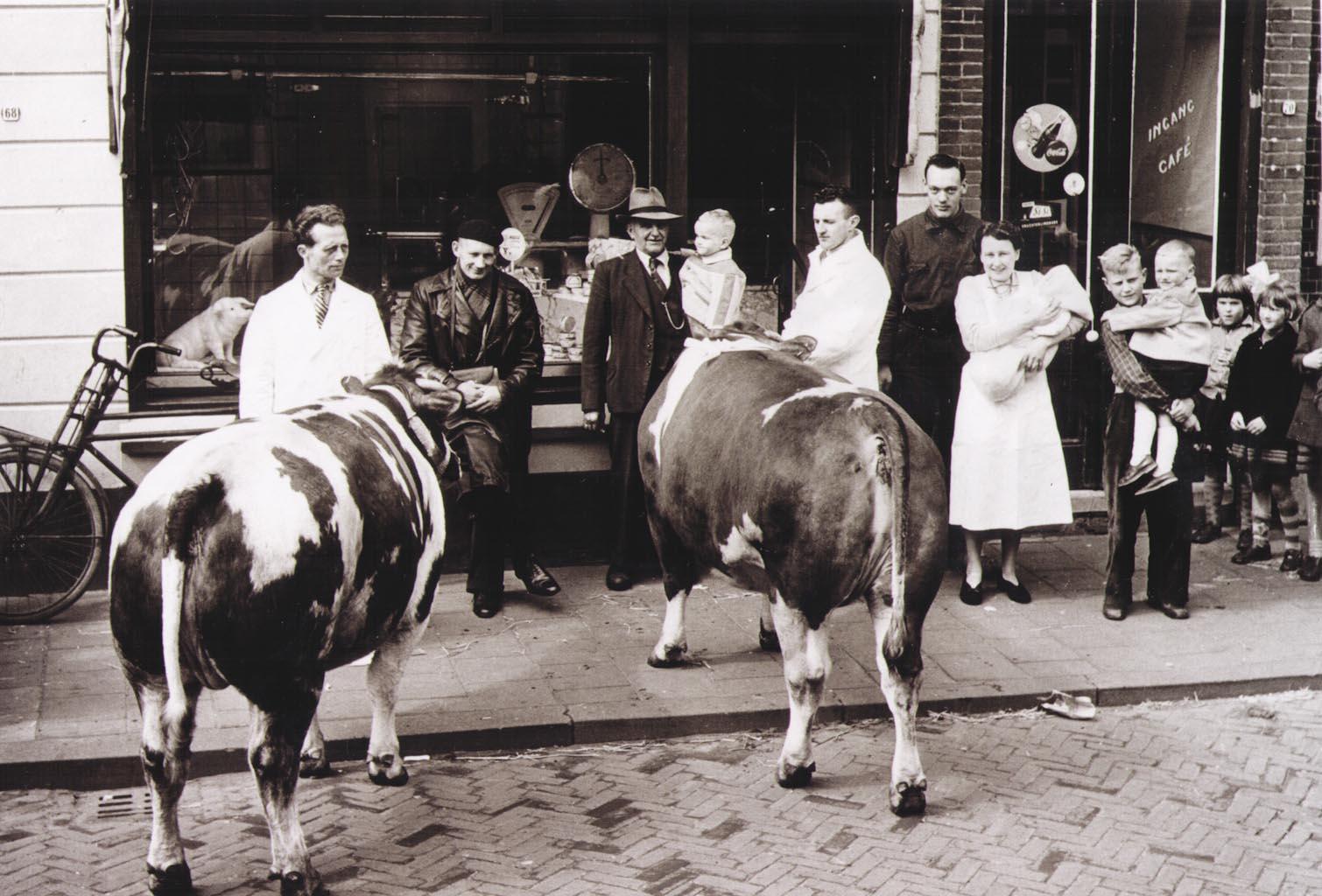 Met de koeien voor de winkel